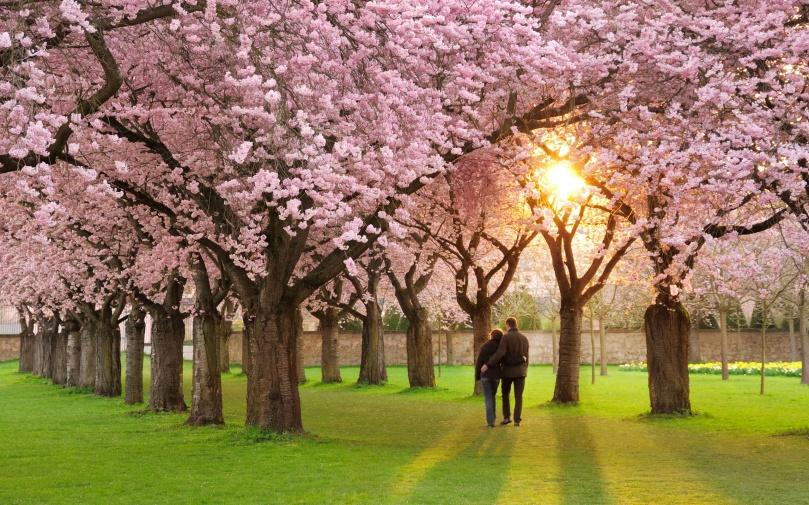 endless-walk-in-spring